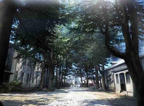 イメージボード_「県の森」(あがたのもり)